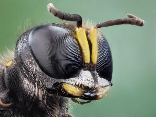 обои Рогатая голова странного насекомого фото