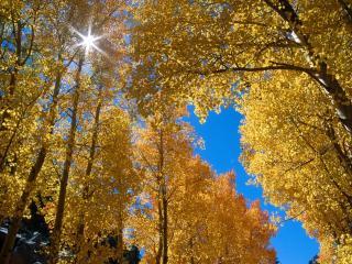 обои Небо и осенний лес фото