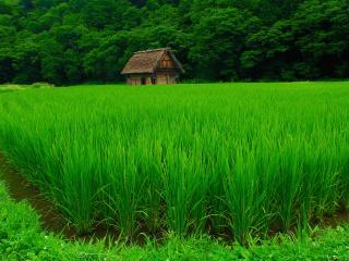 обои Домик в зеленом поле фото