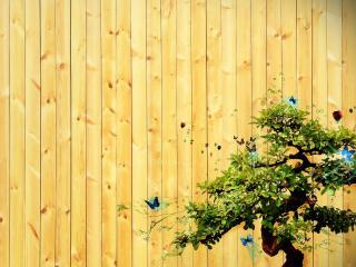 обои Дерево икебана с бабочками фото