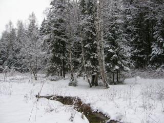обои Зима, елки,   снег и ручеёк фото