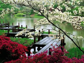 обои Красивый пейзаж у реки фото
