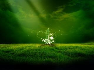 обои Магическое растение на зеленом поле фото