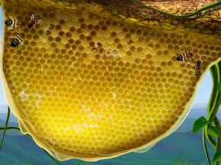 обои Пчелиное улье фото