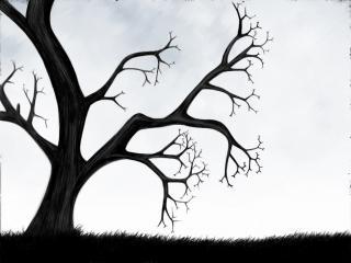 обои Дерево фото