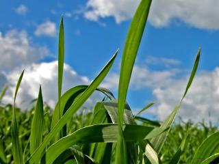 обои Трава на фоне неба фото