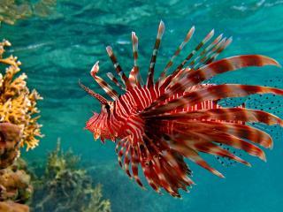 обои Морская рыба фото