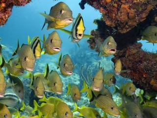 обои Подводный мир,   тропические рыбы в  кораллах фото