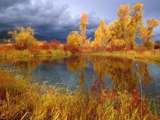 обои Золотая осень. Пасмурно фото