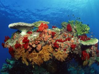 обои Великолепие подводной флоры фото