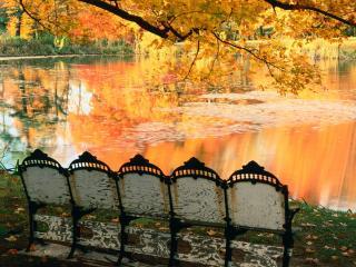 обои Осенний кинозал фото