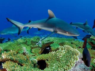 обои Акулы и подводный мир фото
