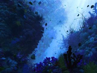 обои Кораловое дно и рыбки фото