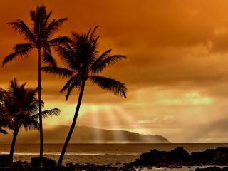 обои Закат в тропиках фото