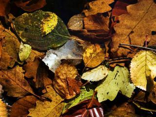 обои Осенний ковер фото