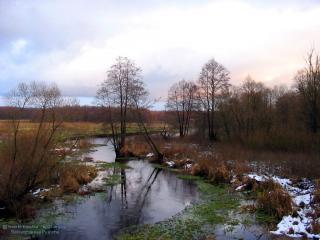 обои Осень в Беловежской пуще фото