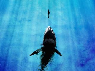 обои Акула и человек в океане фото