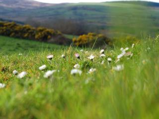 обои Весенние холмы фото