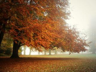 обои Ковёр из листьев под деревьями фото