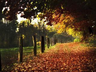 обои Листья опадают,   пришла осень фото