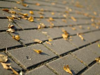 обои Опавшие листья на тротуарной плитке фото