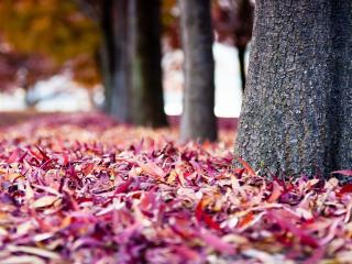обои Опавшие листья у стволов деревьев фото