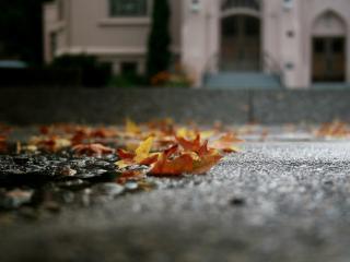 обои Осенние листья на асфальте фото