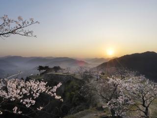обои Японский закат,   весенняя сакура цветет фото
