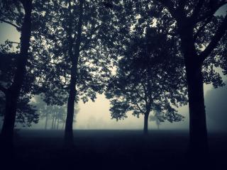 обои Деревья в сумерках фото