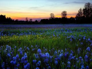 обои Рясно цветущее поле фото