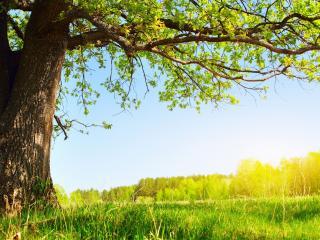 обои Старое дерево в сторонке в солнечный день фото