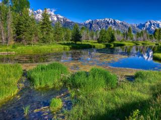 обои Тихая речка и зелень на берегах фото