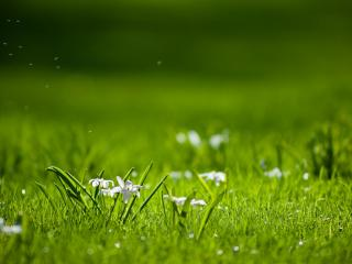 обои Цветы среди травы фото