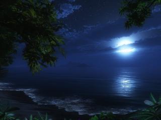 обои Ночные тропики с луной на берегу фото
