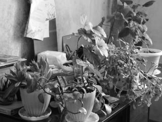 обои для рабочего стола: Домашняя природа
