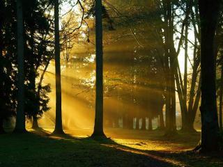 обои Желтые лучи заходящего солнца в парке фото
