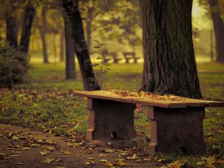обои Опавшие листья в парке фото