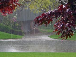 обои Красная листва под проливным дождем фото