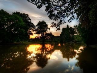 обои Летний пруд в Крымском парке фото