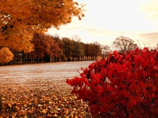 обои Багряная осень фото