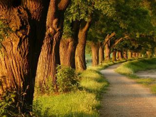 обои Аллея деревьев вдоль тропинки и пруда фото