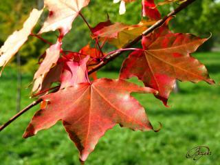 обои Осенний денек фото