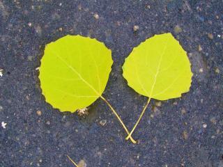 обои для рабочего стола: Листья на асфальте