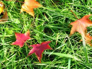 обои Ковер из листьев фото