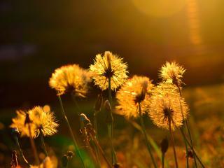 обои Сияние цветов в вечернем свете фото