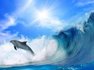 обои Дельфин уплывает от цунами фото
