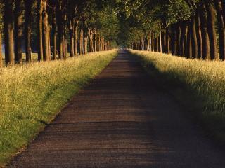 обои Красивая дорога фото