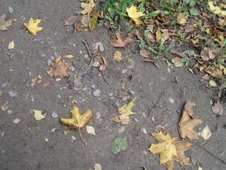 обои Листья на асфальте фото