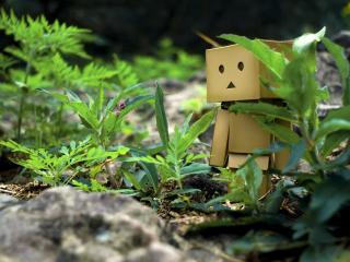 обои Danbo - Между травы и камней фото