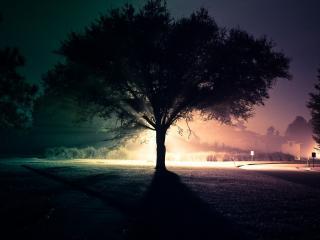 обои Дерево на газоне фото